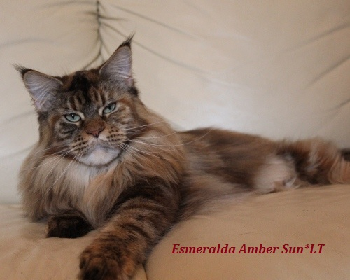 Esmeralda Amber Sun*LT