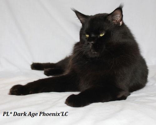 PL* Dark Age Phoenix'LC